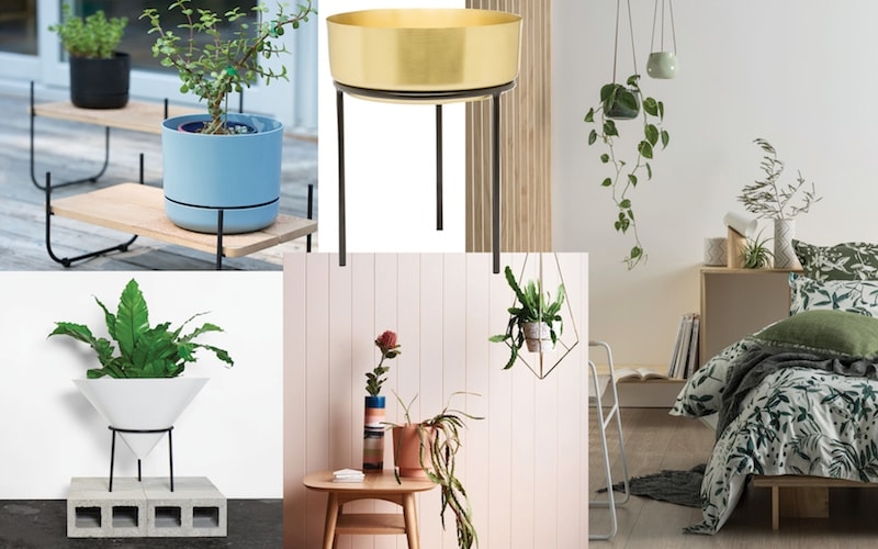 Plants-interior-trends-2018